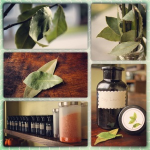 Bay Leaf Bonanza by Kitchenette Finds