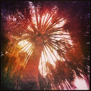 Palmetto Halo by Julia Austine for Meat of the Message