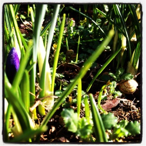 Snail Shell & Spring Shoots